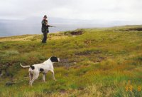 Hunting in Scotland Hills